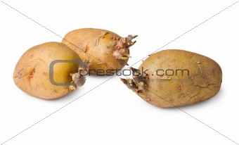 Potato seeds - three tubers on white