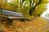 Empty bench and golden leaves