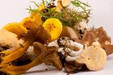 Mixed wild edible mushrooms.
