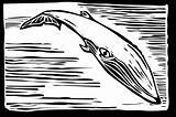Sei Whale
