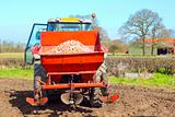 tractor hopper with potatoes