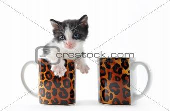 kitten in a cup of tea