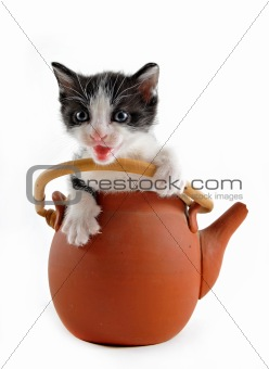 kitten in teapot