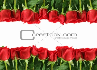 Rows of Red Roses on White