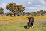 Nice horse grazing