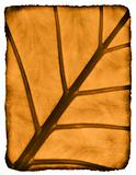 Burnt leaf