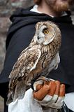 long-eared owl on man's hand
