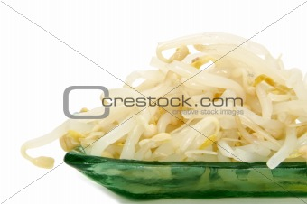 bean fresh sprouts