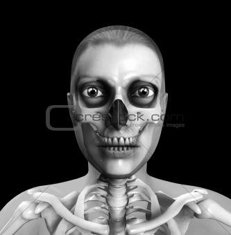 Skull And Flesh