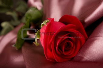 red rose on silk