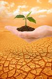 Plant in hand droughty earth