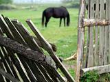Horse pasturing