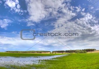 Green meadow under blue sky