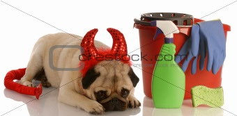 bad dog - pug dressed as devil laying beside cleaning supplies