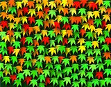 Maple seasons
