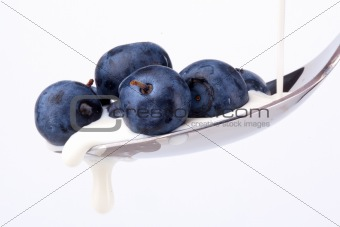 Blueberries and Cream On Spoon