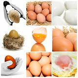 eggs collage