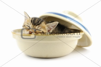 Kitty in bowl