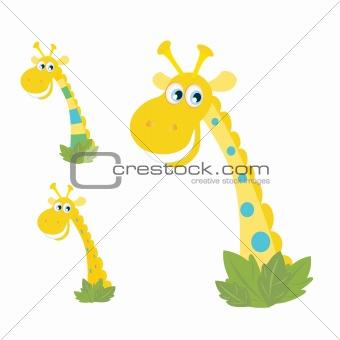 Three yellow giraffe heads isolated on white