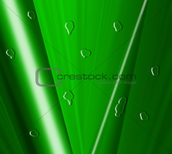 green leaf with drops of water - high resolution