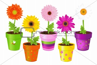 Daisies In Pots With Pictures