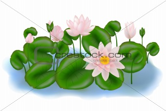 Group Lotuses with leaves