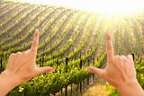 Hands Framing Beautiful Lush Grape Vineyard In The Morning Mist and Sun with Room for Your Own Text.