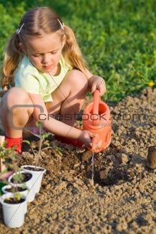 Little girl planting tomato seedlings