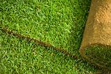 Turf grass roll background