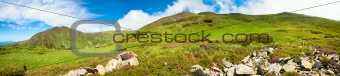 Carpathian Mountains panorama with pink rhododendron flowers