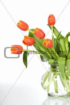 Beautiful orange tulips in glass vase - isolated