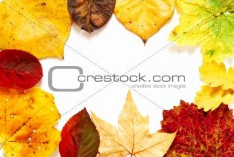 Fall color frame