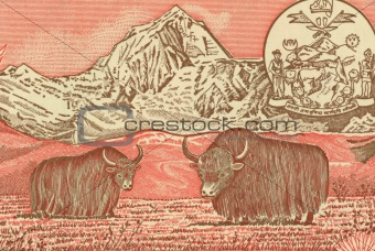 Pair of Yaks