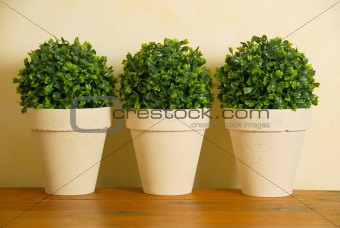 Three decorative pot plants