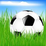 Classic Soccer Ball In Grass