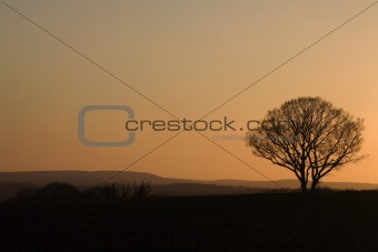 Beautiful lonely tree in sunset. Orange and silhouette.