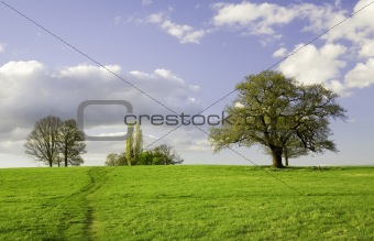 Green field with trees and bright blue sky. Essex, Great Britain