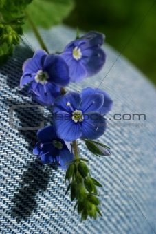 Small dark blue flowers