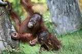 Playful young monkeys
