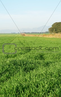 Green grass field with blue skies