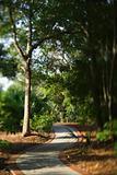 Winding footpath trail.