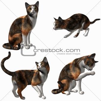 Cat-Calico