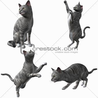 Cat-Silver Tabby