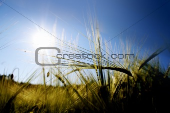 sun above a field