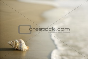 Conch shell on sand with waves.