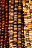 Multicolored Indian corn.