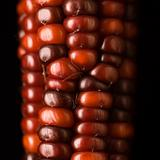 Red Indian corn.