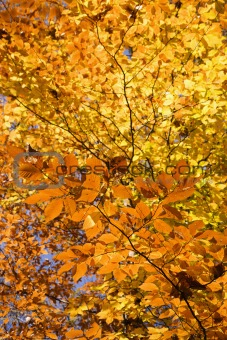 Branches of Fall foliage.