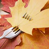 Maple leaf pierced by fork.