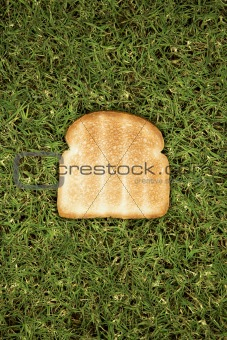 Slice of toast on grass